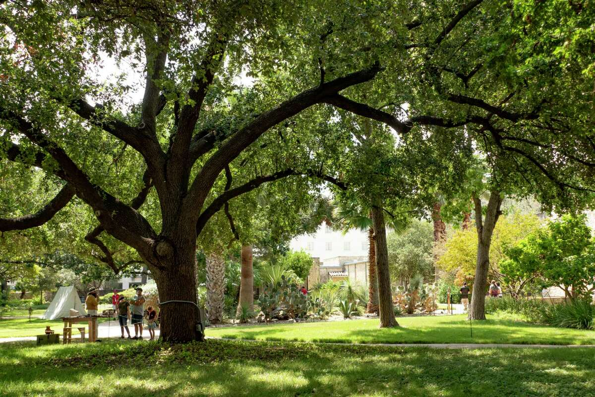 The Alamo grounds are well maintained and offer much shade to visitors.