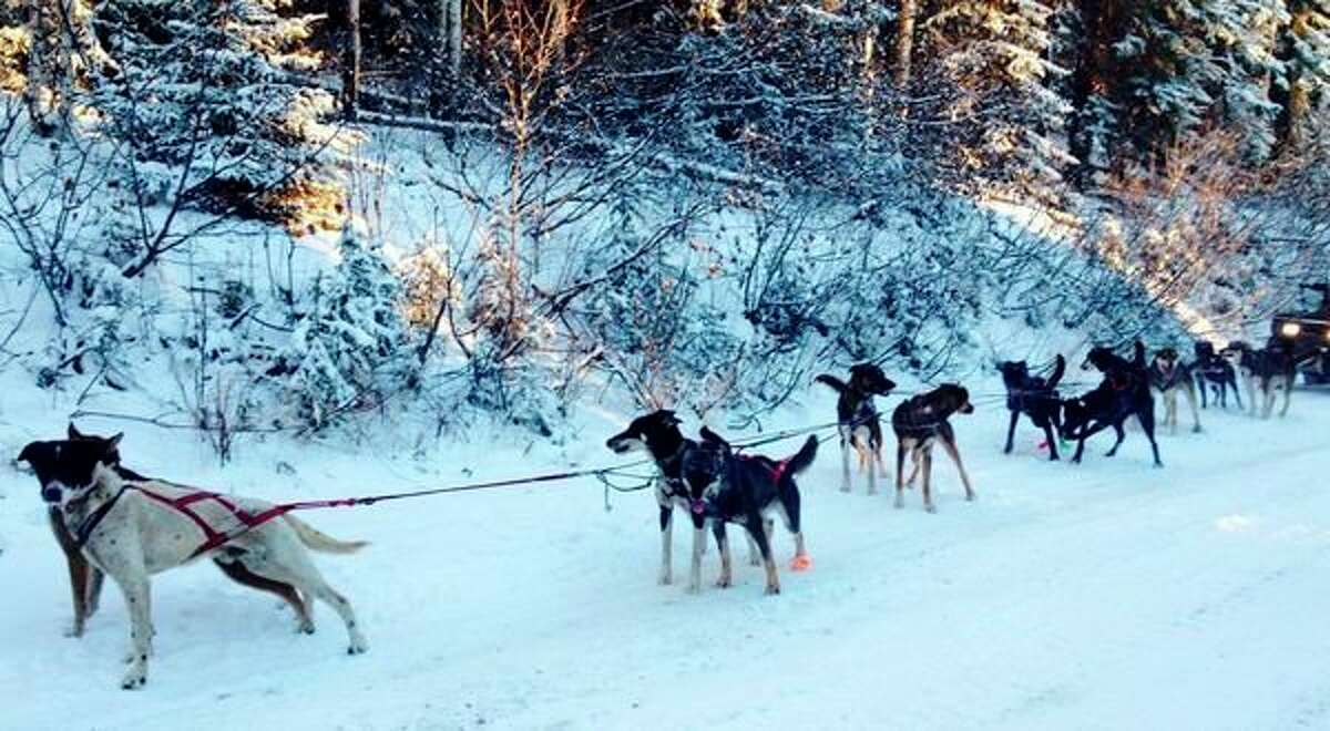 Gladwin native Shaynee Traska is set to again take on the 1,000-mile Iditarod journey through Alaska in March 2021. She and her mush team (pictured) have been training for the event. She completed the race in 2018 and attempted it in 2019 before withdrawing. Traska said her competitiveness has her again entering the race. (Photo contributed by Shaynee Traska)