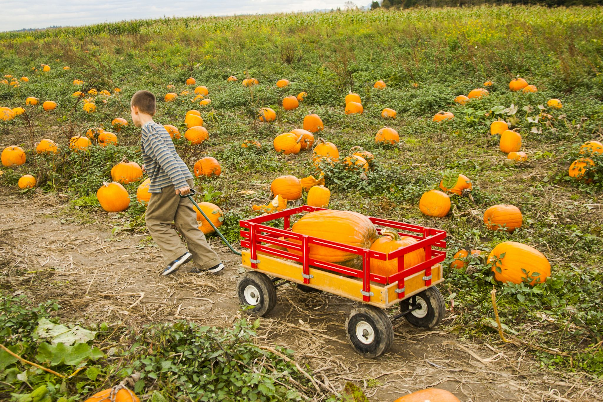 9 popular pumpkin patches less than an hour drive from Seattle