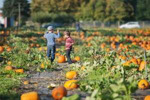Two young boys exploring a pumpkin patch in October on a sunny day.