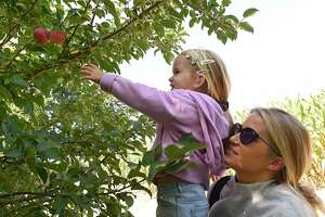 Victoria Martin, 2, of East Greenbush picks apples with help from her mother Stephanie Martin at Windy Hill Orchard on Tuesday, Sept. 22, 2020 in Castleton, N.Y. (Lori Van Buren/Times Union)