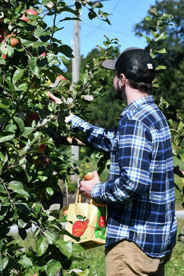 March Farms welcomed guests to their orchard Saturday for apple-picking. The season is in full swing now and the trees are full of ripe fruit. Photo: Lara Green-Kazlauskas / For Hearst Connecticut Media