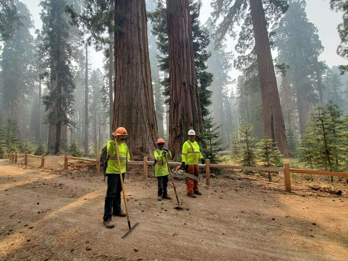 The CHIPS crew in action in Mariposa Grove.