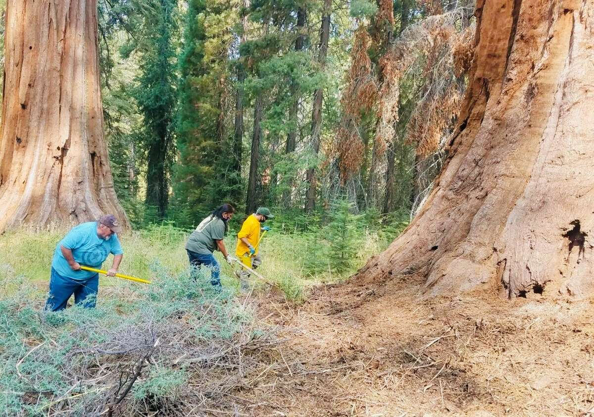 Alveta Coats leads her team in clearing the decaying foliage around the giant sequoias in Yosemite National Park.