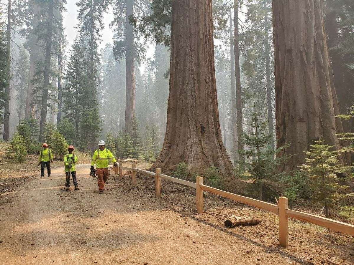 CHIPS workers are helping to ready the Mariposa Grove for the Creek Fire.