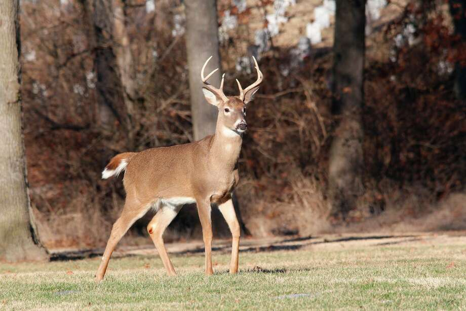The Department of Natural Resources is predicting favorable conditions for the 2020 deer season. (Courtesy Photo)