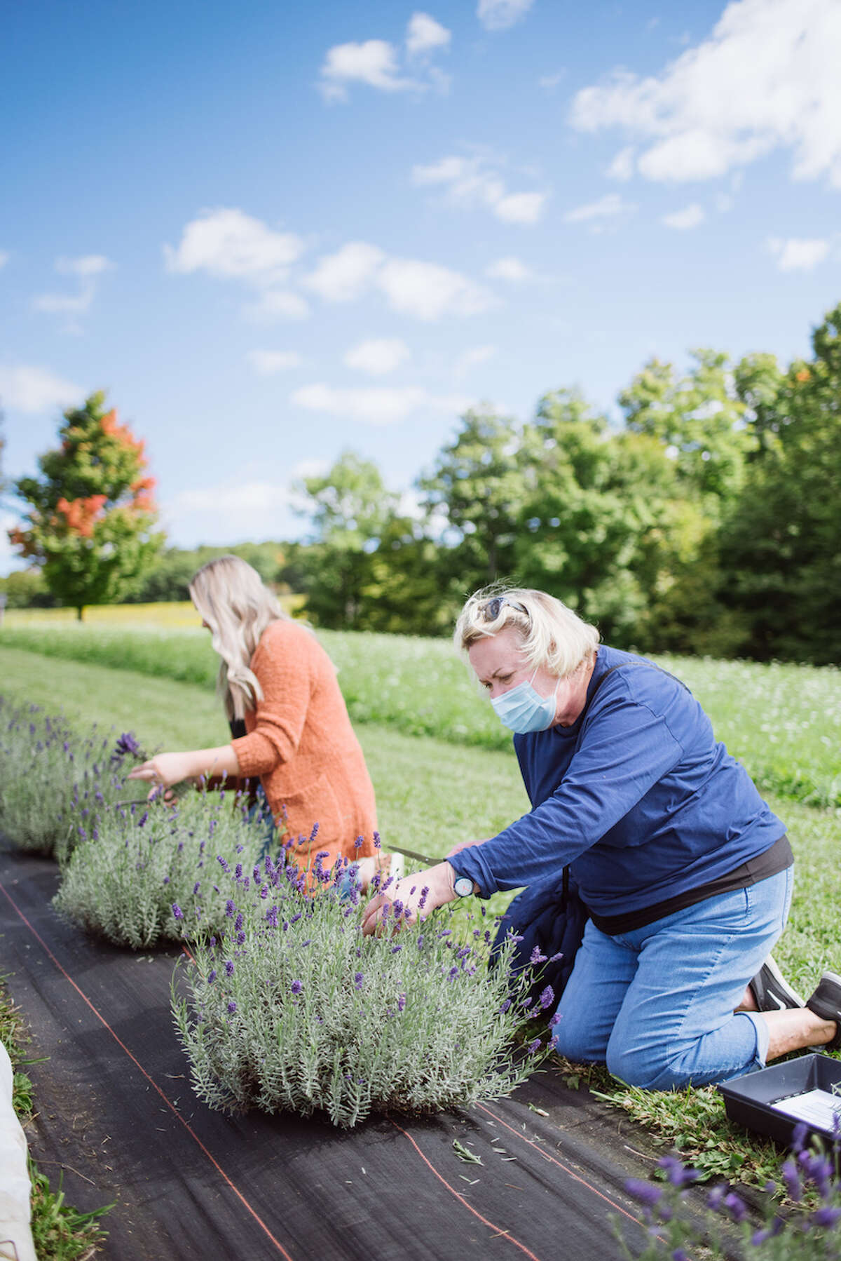 Were you seen at the Beekman 1802 Lavender Harvest at Slate Hill Flower Farm in Sharon Springs on Sept. 19-20, 2020.