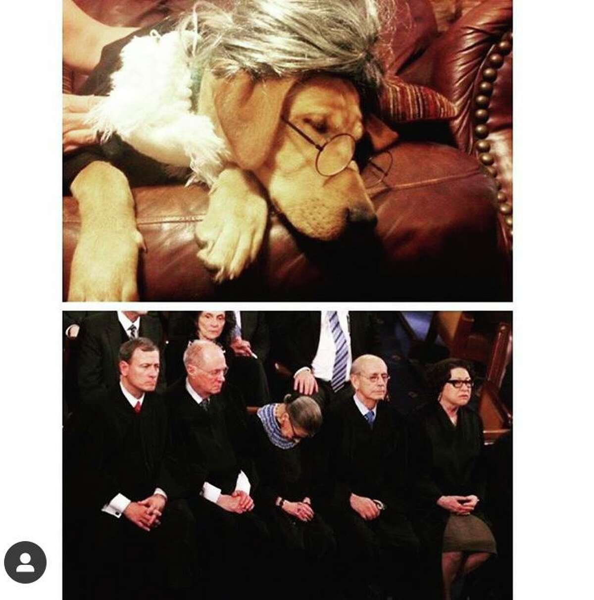 Jessica Revils dressed up her red lab Ginsburg honor of her namesake, Justice Ruth Bader Ginsburg. Revils shared this image, juxtaposed with an image of Ginsburg falling asleep at the State of the Union, with her legal heroine at an overseas legal program in Malta on July 4, 2017 when she was a student at South Texas College of Law.