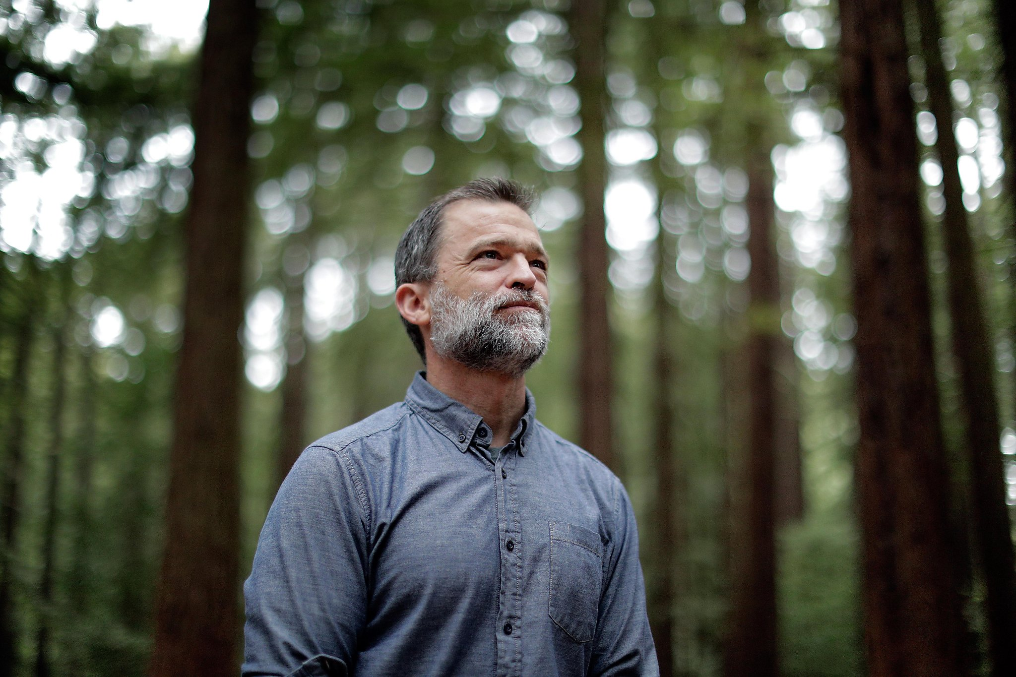 Why we need redwoods to fight climate change