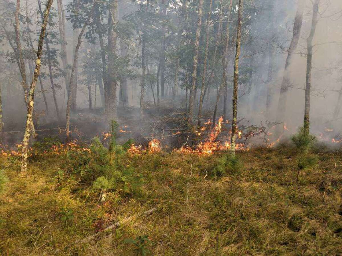 The fire danger for Connecticut is very high on Thursday, Sept. 24, 2020, according to the state Department of Energy and Environmental Protection. Very high is the second highest forest fire danger level. This photo is from a forest fire in Windham earlier this month.