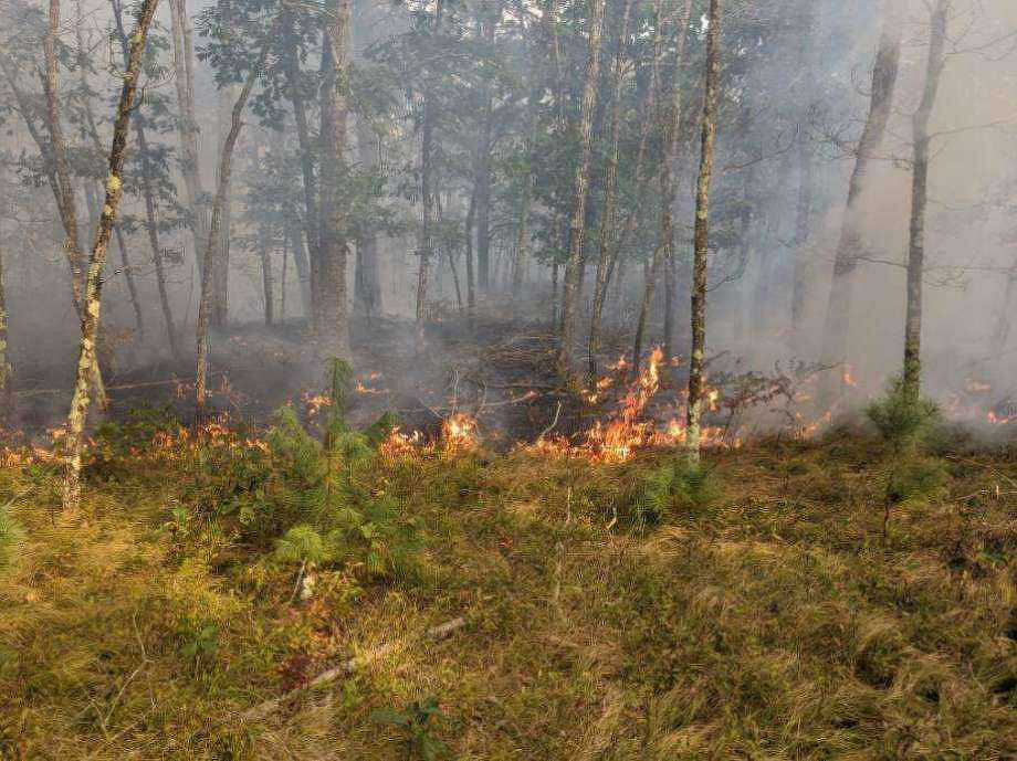 The fire danger for Connecticut is very high on Thursday, Sept. 24, 2020, according to the state Department of Energy and Environmental Protection. Very high is the second highest forest fire danger level. This photo is from a forest fire in Windham earlier this month. Photo: North Windham Fire Department Photo