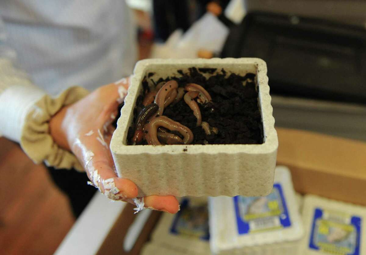 Shown are red wiggler worms, which are key to composting. The city of Middletown is offering compost bins and rain barrels to help residents conserve water, reduce waste and save money.