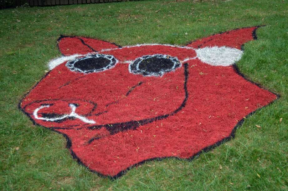 """A large backyard picture of Sweetmeat, the KSHE mascot, is part of Frank Verdu's entry for the radio station's """"Show Us Your Grass"""" contest. Photo: Scott Marion 