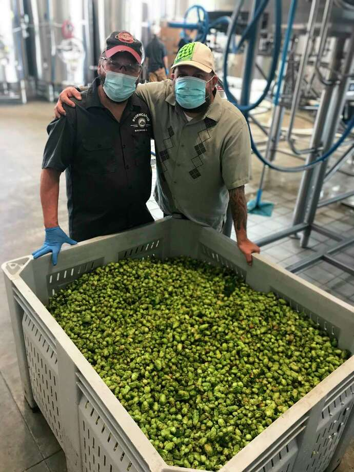 Brian Confer, brewer and co-owner of Stormcloud Brewing Company, with Brian Tennis, founder of Michigan Hop Alliance, with fresh hops used to make Stormcloud's Harvest Triple (Courtesy Photo)