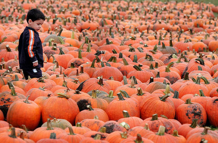 Two-year-old Aubry Deroche searches for his perfect pumpkin in Prairie View. Photo: Scott Olson | Getty Images