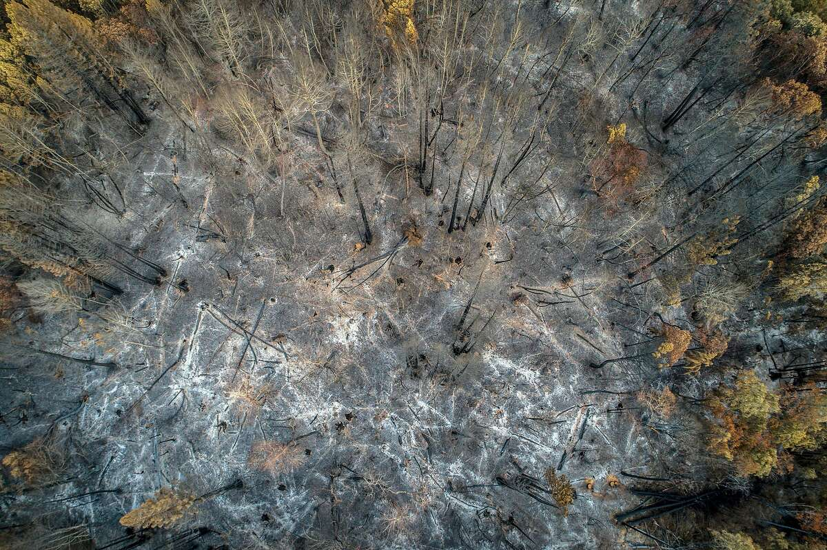 Burn scars where trees burned, fell and left piles of ashes in the areas devastated by the Walbridge fire off Mill Creek road outside Healdsburg, Calif., on Wednesday, September 23, 2020.