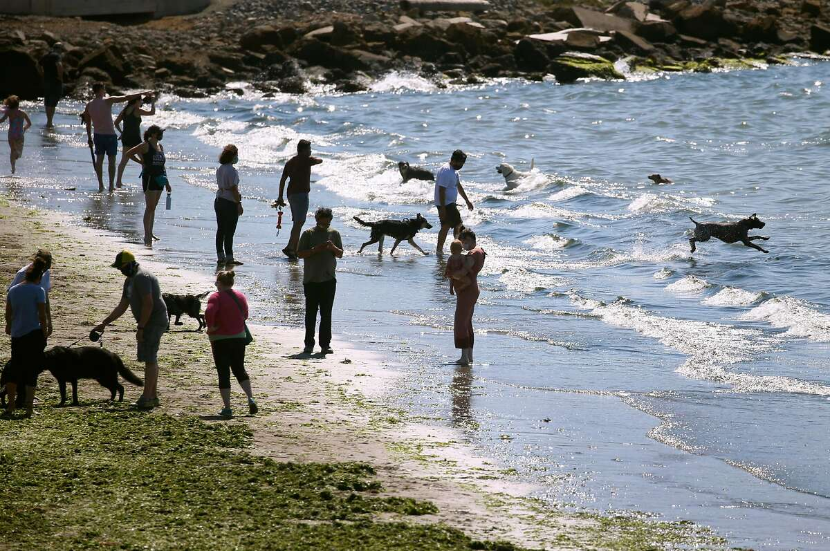 Humans and canines step into the surf on the beach at the Albany Waterfront Trail in Albany on Saturday. A red flag warning has been issued through Monday evening as temperatures are expected to rise and gusty winds could lead to high fire danger.