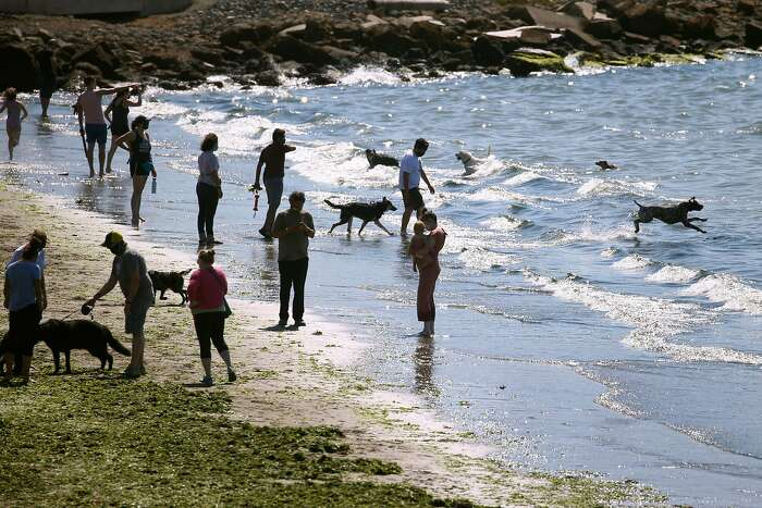 Humans and canines step into the surf on the beach at the Albany Waterfront Trail in Albany, Calif. on Saturday, Sept. 26, 2020. A red flag warning has been issued through Monday evening as temperatures are expected to rise and wind from the north could lead to high fire danger.