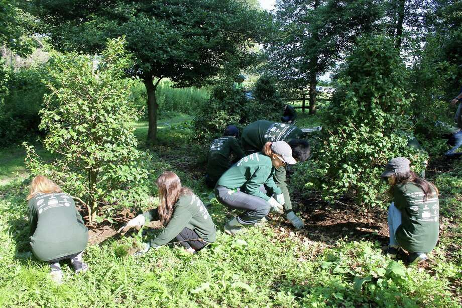 Volunteers work to clean up the Holly Grove area of Greenwich Point. The next cleanup will be held on Oct. 3 and volunteers are needed to step up and help out. - Photo: Photo Courtesy Of Jessica Reid