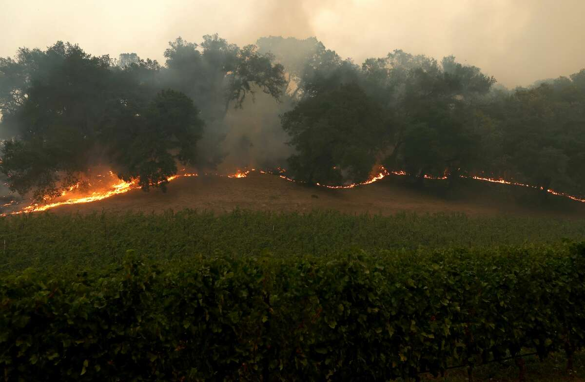 The Glass Fire burns next to a vineyard on September 26, 2020 in Napa, California. The fast moving Glass fire has burned over 1,000 acres and prompted evacuations. Much of Northern California is under a red flag warning for high fire danger through Monday evening. (Photo by Justin Sullivan/Getty Images)