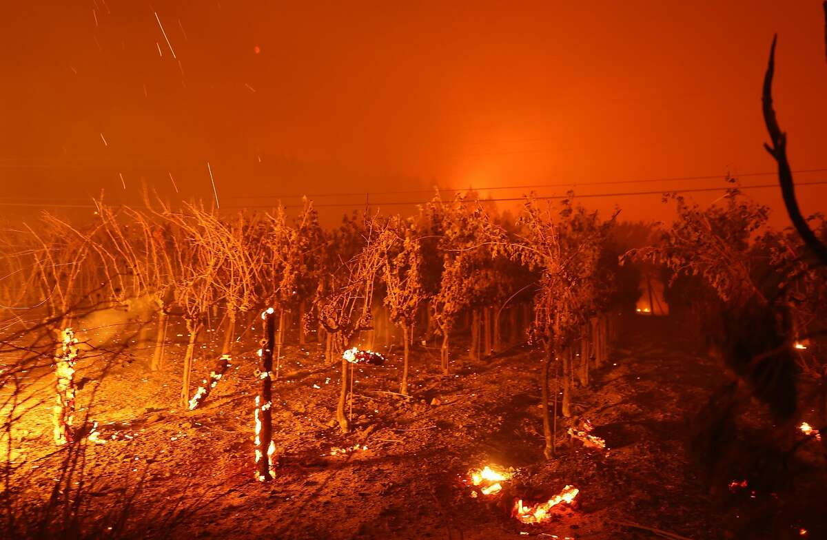 ST. HELENA, CALIFORNIA - SEPTEMBER 27: Grape vines at Chateau Boswell Winery burn as the Glass Fire moves through the area on September 27, 2020 in St. Helena, California. The fast moving Glass fire has burned over 1,000 acres and has destroyed homes. Much of Northern California is under a red flag warning for high fire danger through Monday evening. (Photo by Justin Sullivan/Getty Images)