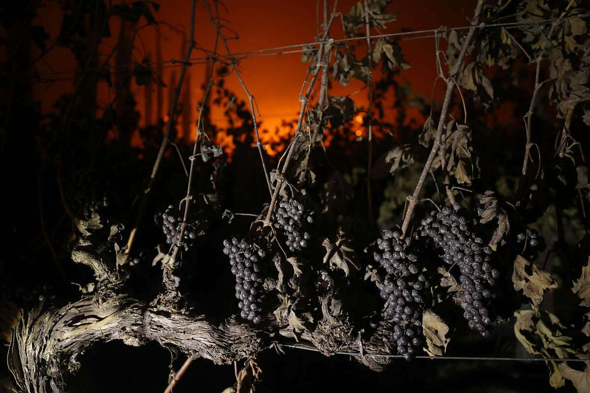 Grapes hang from a vine at Chateau Boswell Winery burns as the Glass Fire moves through the area on September 27, 2020.