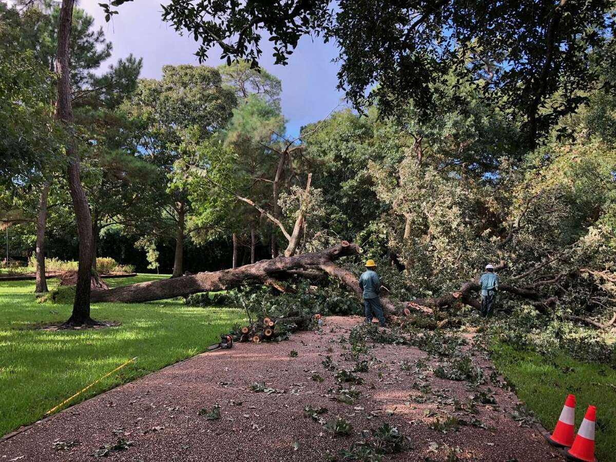 Windstorms cause widespread damage to trees and tree limbs in the Houston area.