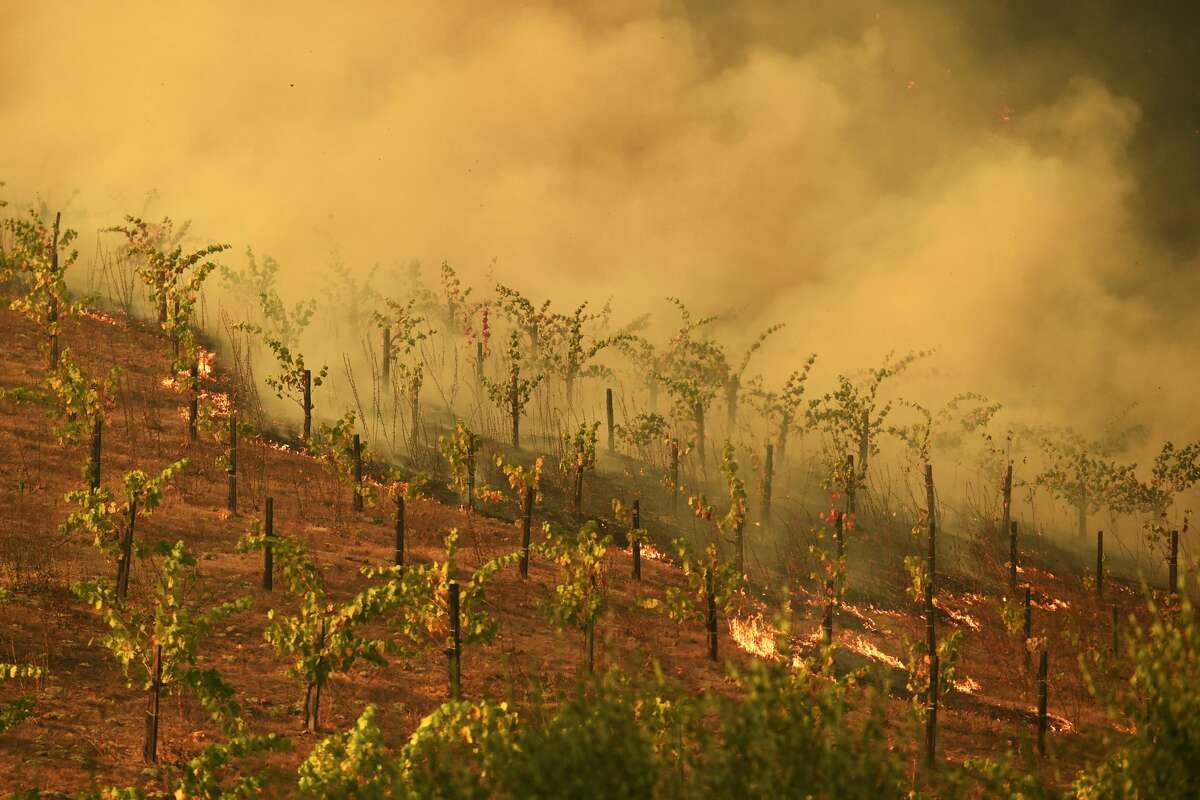 A vineyard on Silverado Trail burns during the Glass Fire in St. Helena, Calif., on Sunday, Sept. 27, 2020.