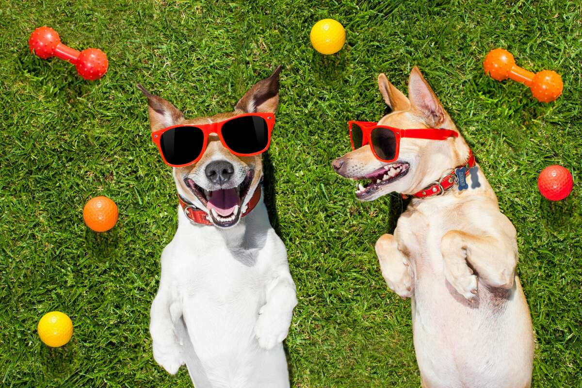 Keep your pets entertained longer with the perfect treat toy.
