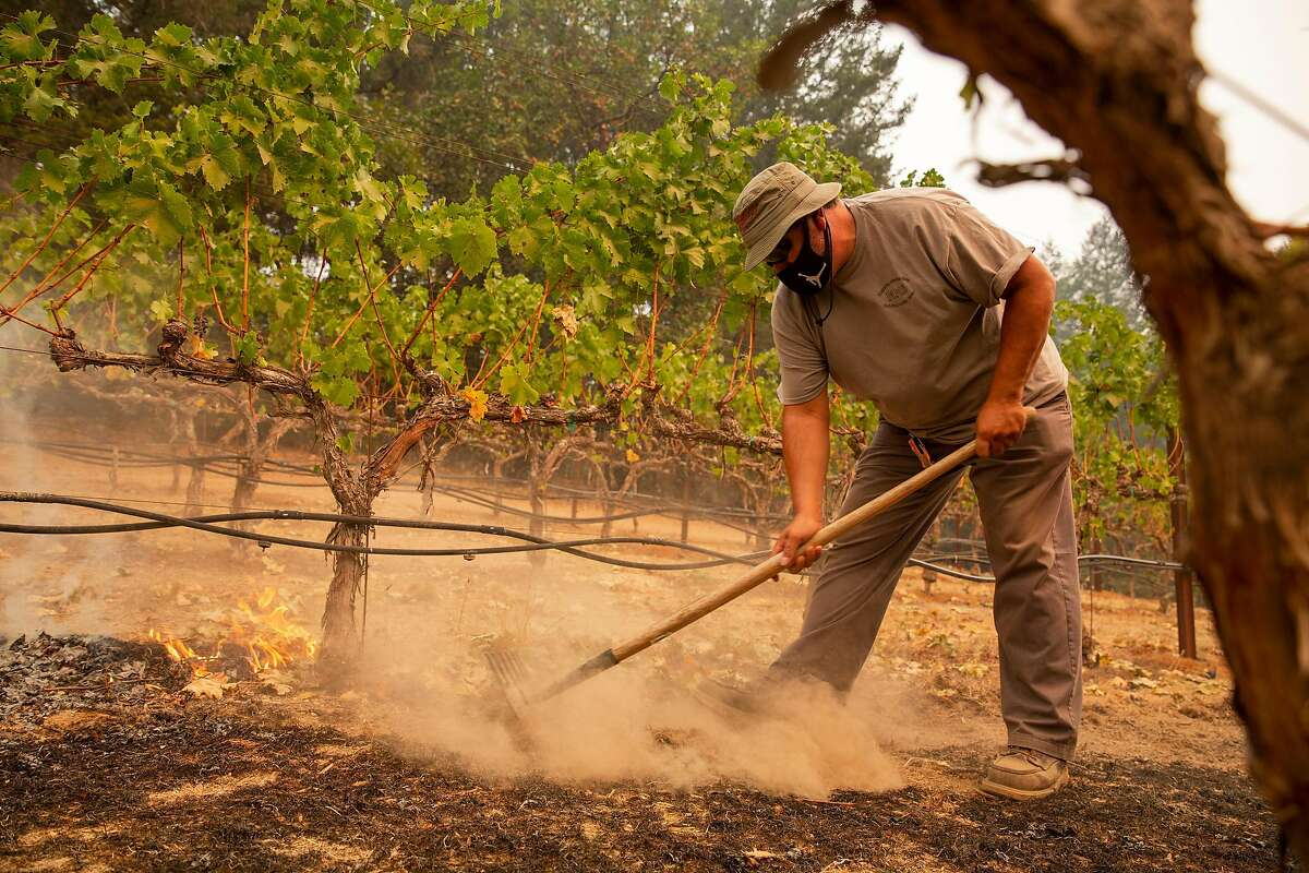 Jesus Calderon uses a hand rake to stop small spot fires that are creeping into the vineyard during the Glass Fire at Schramsberg Winery in Calistoga, Calif. on Monday morning, Sept. 28, 2020.