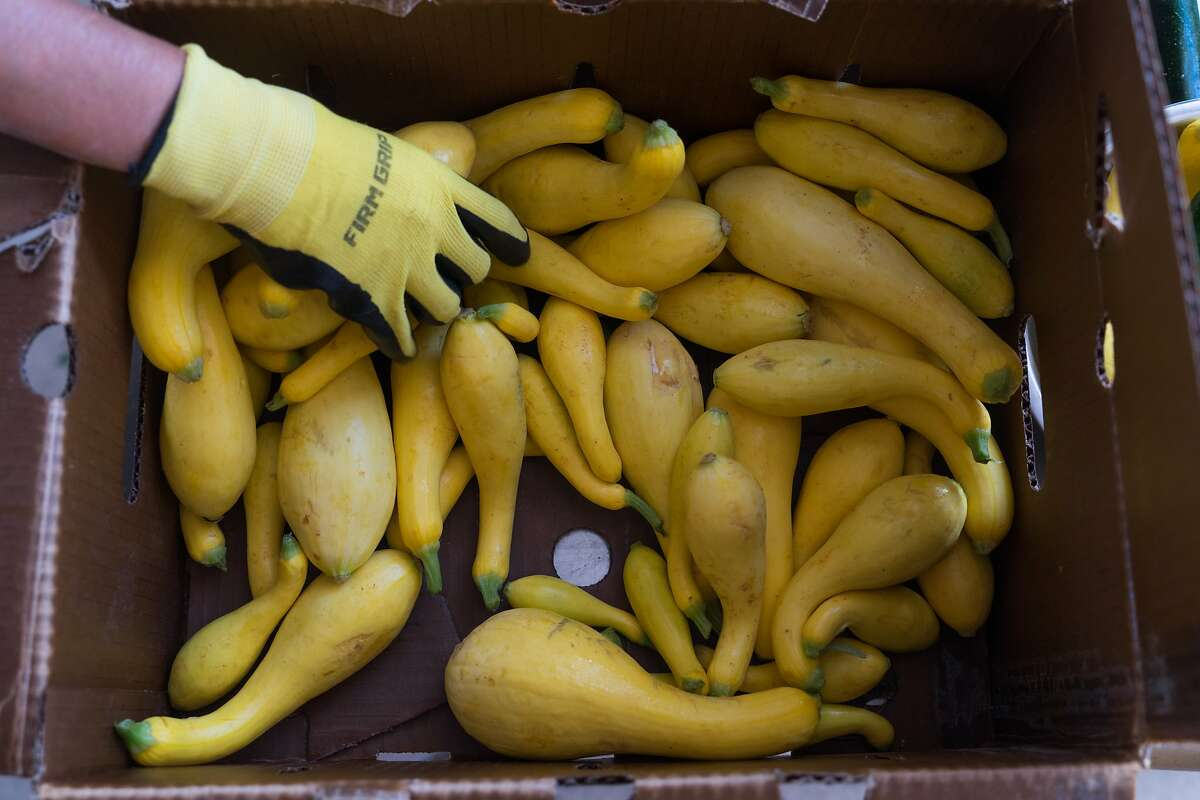 Local farms drop off produce at Pie Ranch to be distributed to low-income families in June. The program may have to end because of a lack of USDA funding.