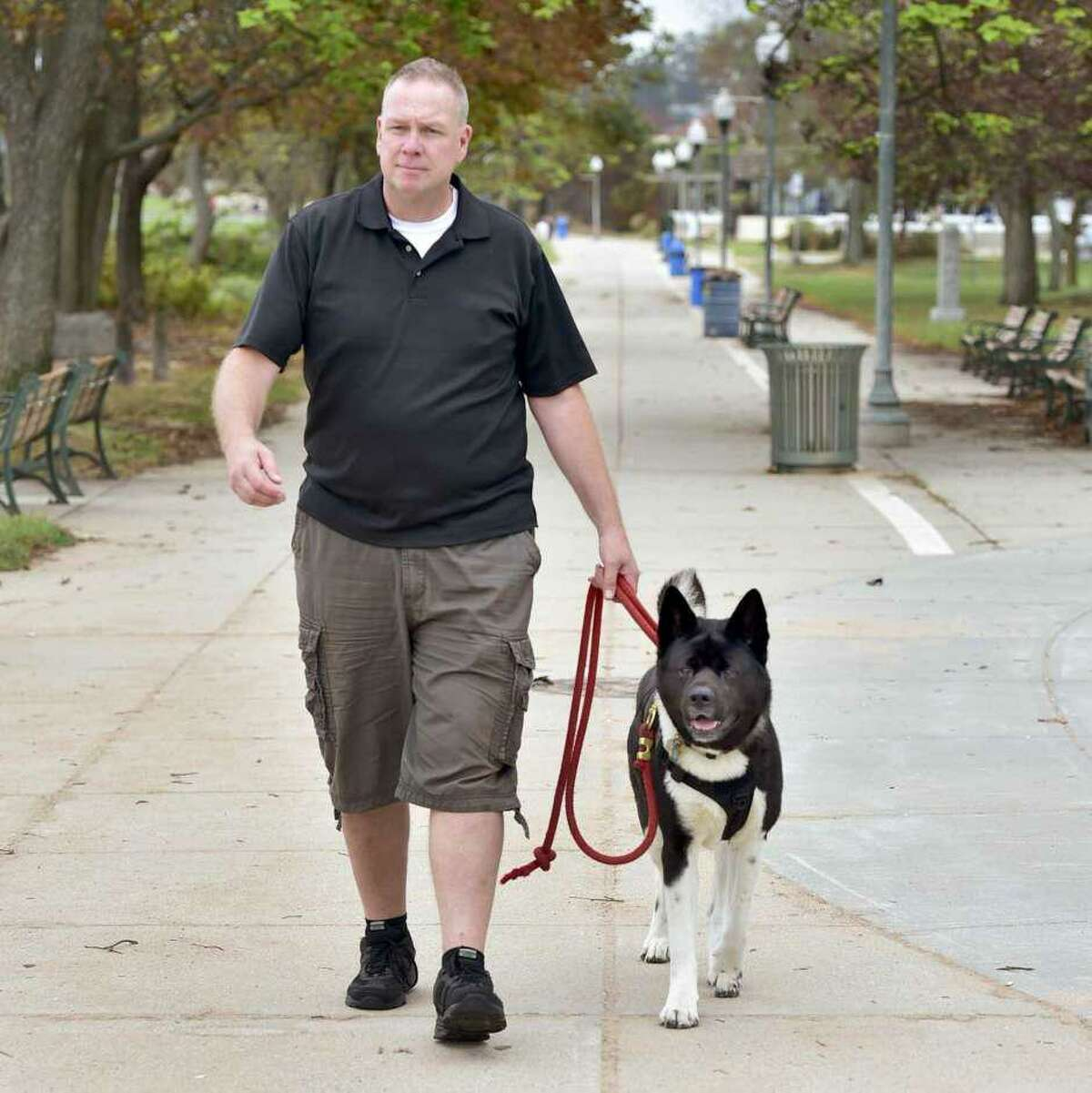 In this file photo, Bradford Cole of Milford, K9 First Responders executive director, walks Niko, his Akita breed dog, along the West Haven beach boardwalk. Cole is a believer in using 6-foot leashes that enable the dog handler to control their dog in unpredictable environments.