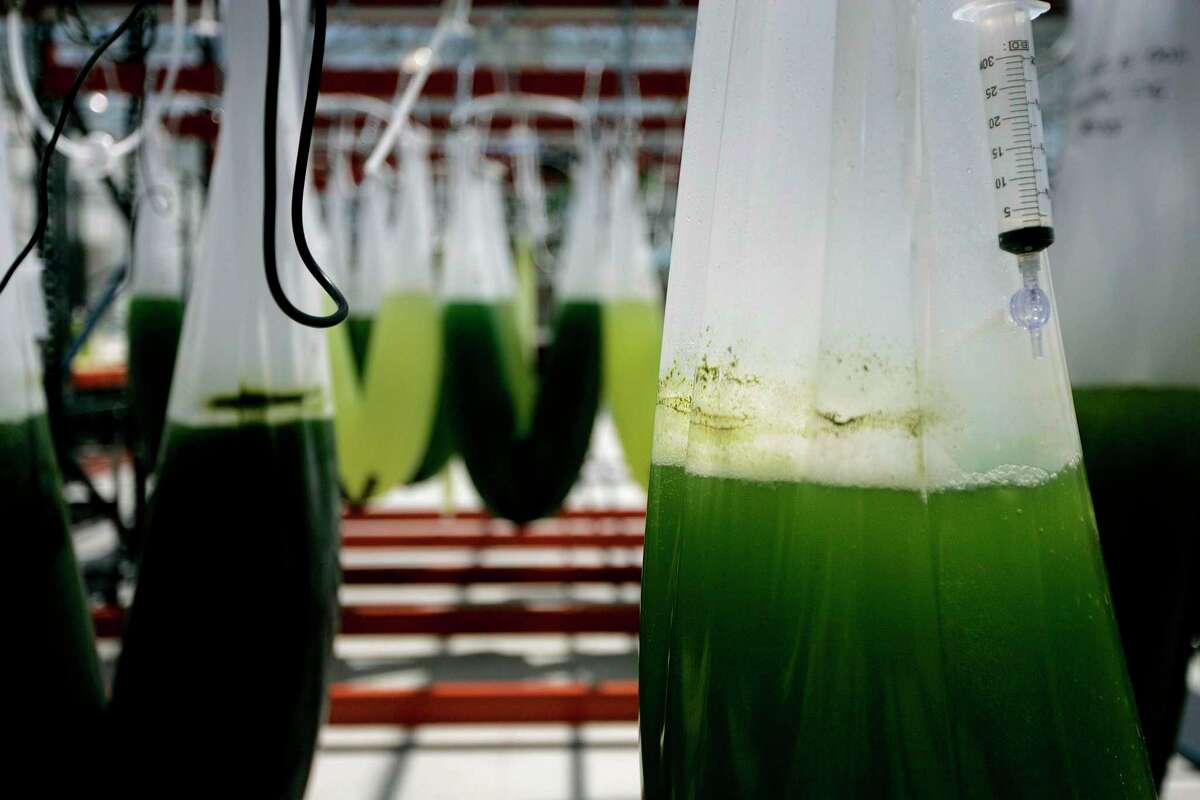 Exxon Mobil works on algae strains whose oils can potentially fuel trucks and airplanes, in La Jolla, Calif. While BP and other European companies invest billions in renewable energy, Exxon and Chevron are committed to fossil fuels and betting on moonshots.