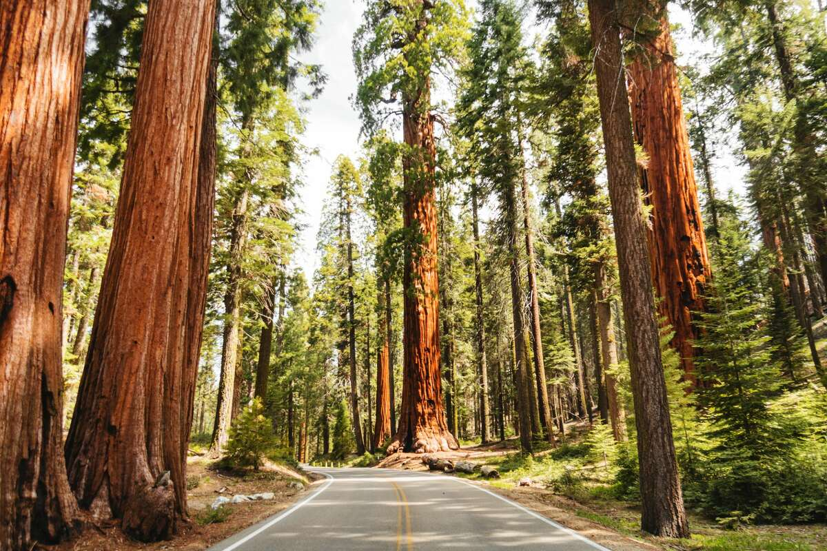 Redwood National and State Parks contain the world's tallest trees.