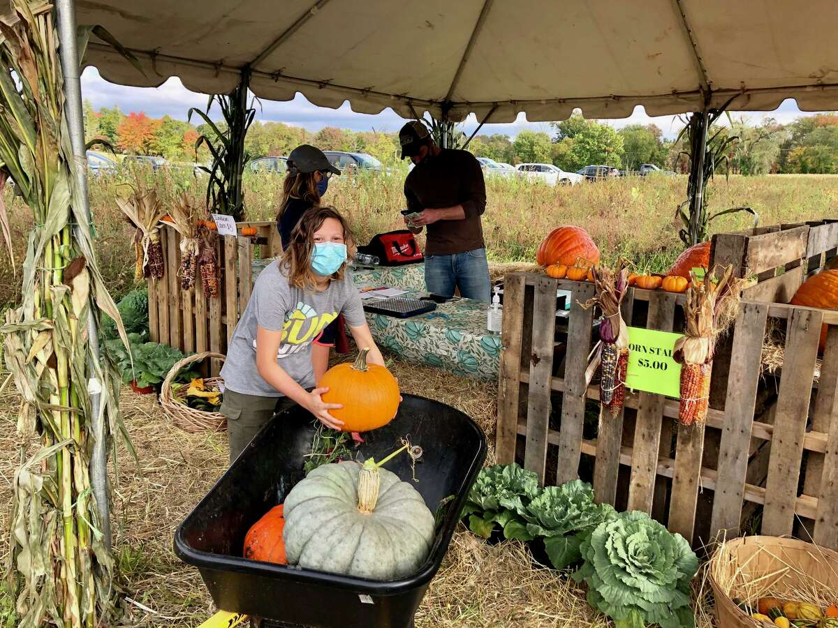 Pippa Morgan, 14, of Darien, found there were plenty of pumpkins at Castle Hill Farm in Newtown, Sept. 26, 2020.