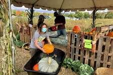 Pippa Morgan, 14, of Darien, found there were plenty of pumpkins at Castle Hill Farm in Newtown, Sept. 26, 2020.