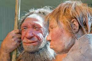 """This Friday, March 20, 2009 file photo shows reconstructions of a Neanderthal man named """"N"""", left, and woman called """"Wilma"""", right, at the Neanderthal museum in Mettmann, Germany."""