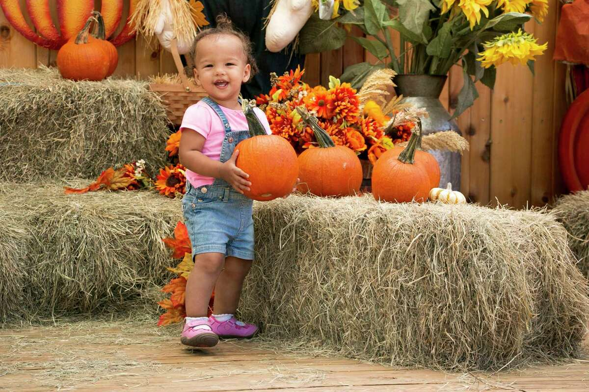Every year around the end of September through October, Old McDonald's Farm on FM 1960 in Atascocita opens a seasonal pumpkin patch at the front of their large, outdoor center. Located next to the train stop that offers a ride across the farm, the pumpkin patch is a photo-ready center, offering one free pumpkin to kids 18 months to 14 years of age with the purchase of a $14 farm ticket.