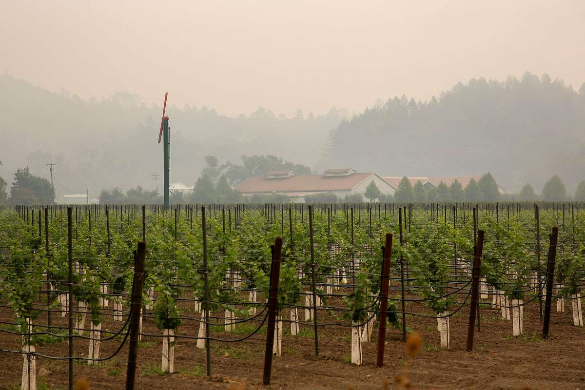 A vineyard is surrounded by smoke from the Glass Fire along the Silverado Trail in Calistoga, Calif. on Wednesday, Sept. 30, 2020.
