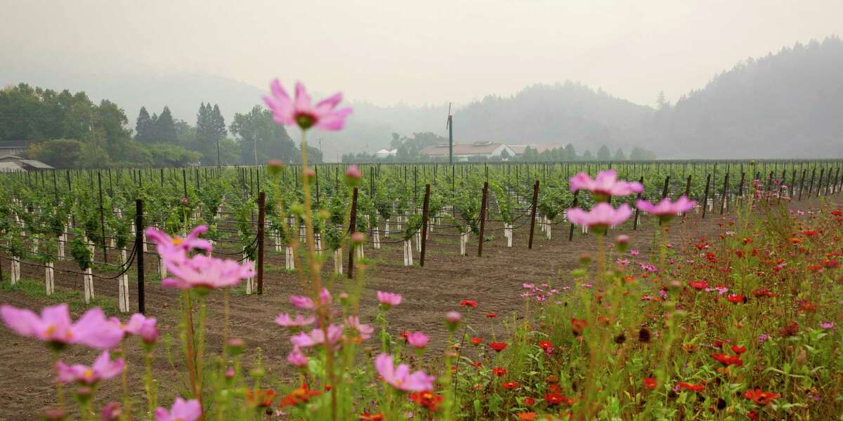Wildflowers line the Silverado Trail in front of a vineyard while smoke from the Glass fire hangs in the air in Calistoga, Calif. on Wednesday, Sept. 30, 2020.