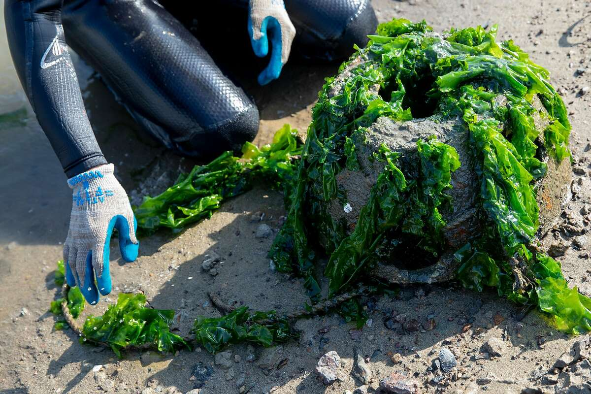 Young kneels by a domed reef ball, whose walls are embedded with crushed oyster shells and covered with sea lettuce.