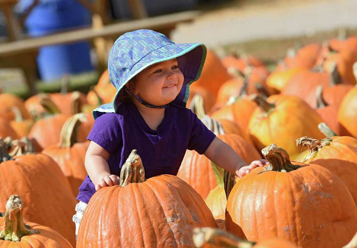 Daria LaRocque, 15 mos., of San Francisco smiles as she spots a doggie while picking out a pumpkin at Indian Ladder Farms on Thursday, Oct. 1, 2020 in Altamont, N.Y. She was visiting her grandparents who live in Glenmont with her parents. (Lori Van Buren/Times Union)