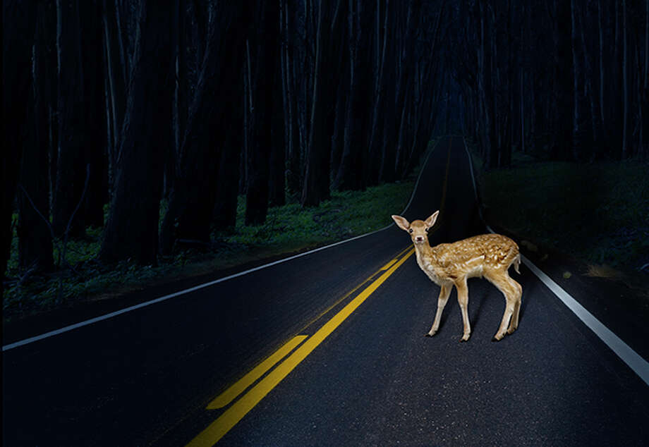 October through December is deer mating season and with the increase of deer comes the increase of car crashes involving them, November being the peak month. Photo: John M Lund Photography Inc/Getty Images