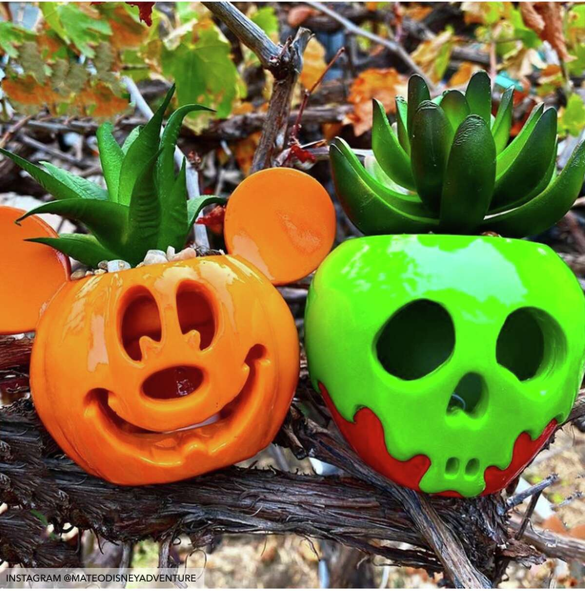 Disney succulents will add the perfect touch of cuteness to Halloween.