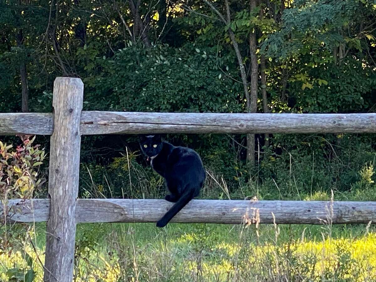 Dave Hancock of Delmar found this cat on a country fence in Grapeville, N.Y.