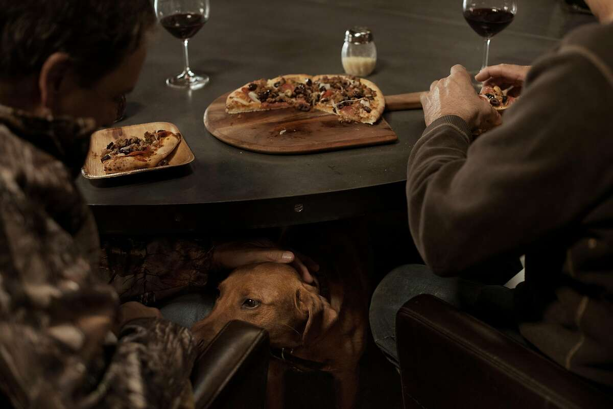 The smell of pizza attracts on one of the in-house Labradors roaming the main house for some attention at Wing & Barrel Ranch in Sonoma, Calif., on March 15, 2020.
