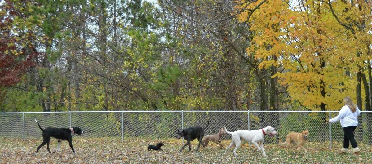 Ferris students will soon be building a new shelter at Brutus Dog Park for pet owners to stand under during bad weather. The shelter will be constructed Oct. 9-11, with any additional work taking place the following weekend. (Courtesy photo)