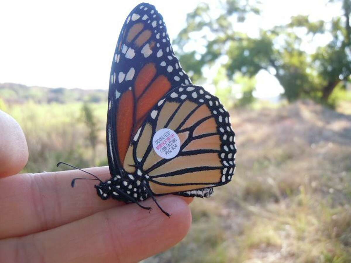 The Monarch Butterfly and Pollinator Festival will honor lost loved ones by tagging a monarch butterfly in their name.