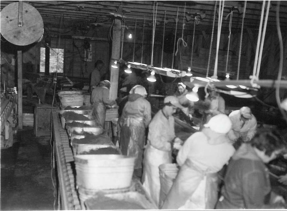 (LEFT) Women were hired seasonally and during World War II byChittenden Nursery to do the work that had previously been reserved for men. (RIGHT) A Chittenden Nursery employee prunes roots of young jack pines May 23, 1954.Women were hired seasonally and during World War II by the nursery to do the work that had previously been reserved for men.(Courtesy photo/U.S. Forest Service's Huron-Manistee National Forest Historic Photograph Collection)