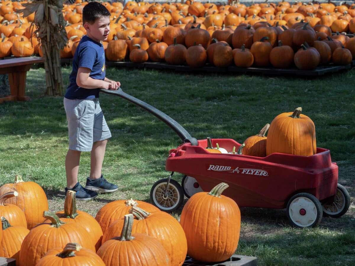 J.C. Herrera pushes his cart of pumpkins after picking out a few 10/03/2020 at the St. Luke's United Methodist Church Pumpkin Patch. Tim Fischer/Reporter-Telegram